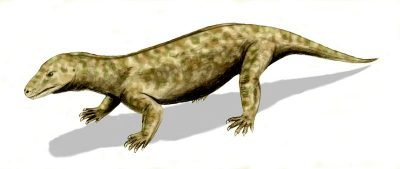 Ancestor of all mammals - Procynosuchus